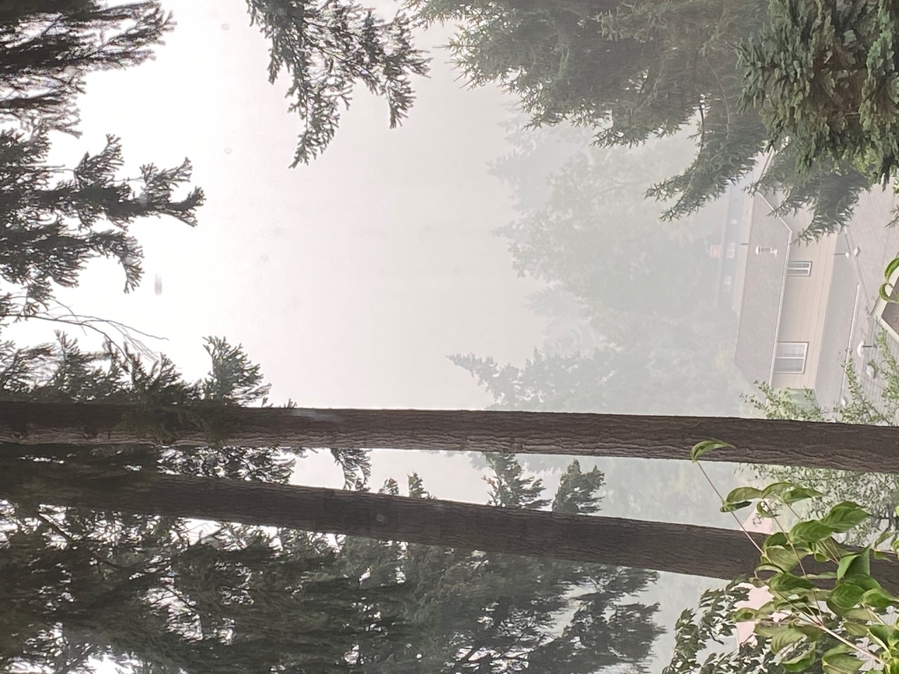 View from Oregon Usher 1F researcher Jennifer Phillips' window during the fires