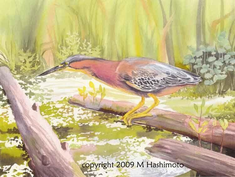 molly hashimoto watercolor class