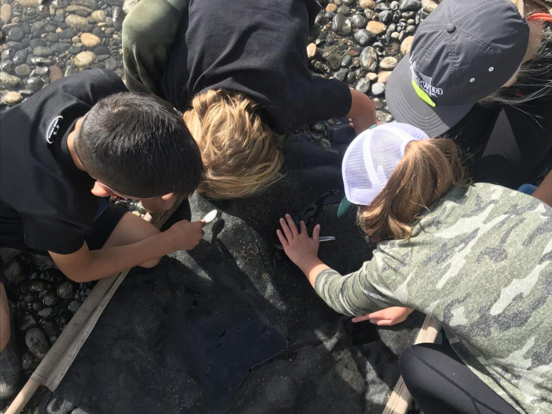Field Day - Aquatic Macroinvertebrates
