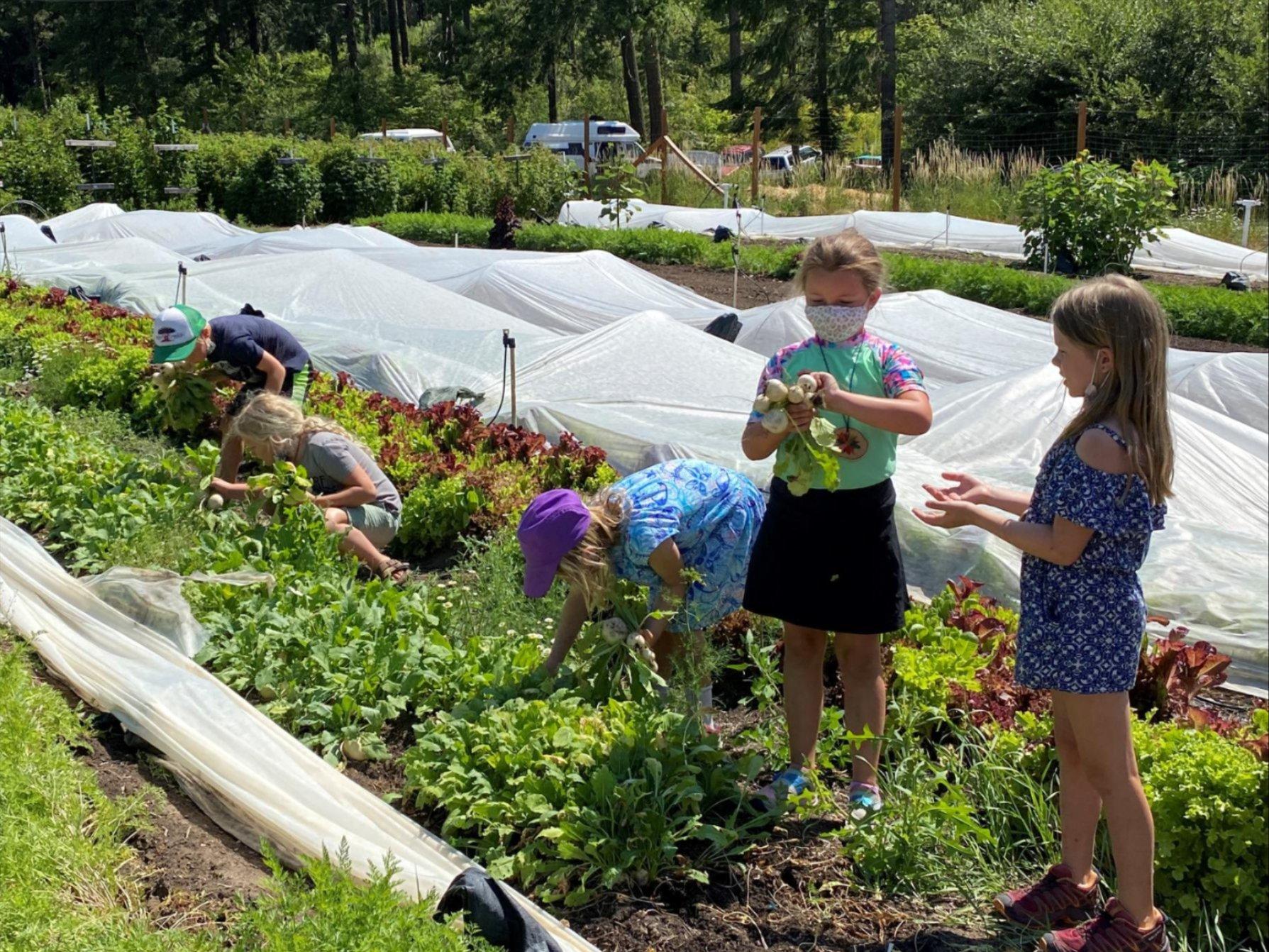Soil to Snack - Turnip Glean