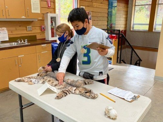 Field Day - Looking at Pelts and Skulls
