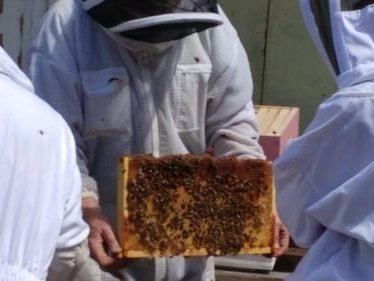 Intro to Beekeeping Workshop