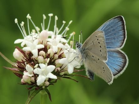 Butterfly Workshop